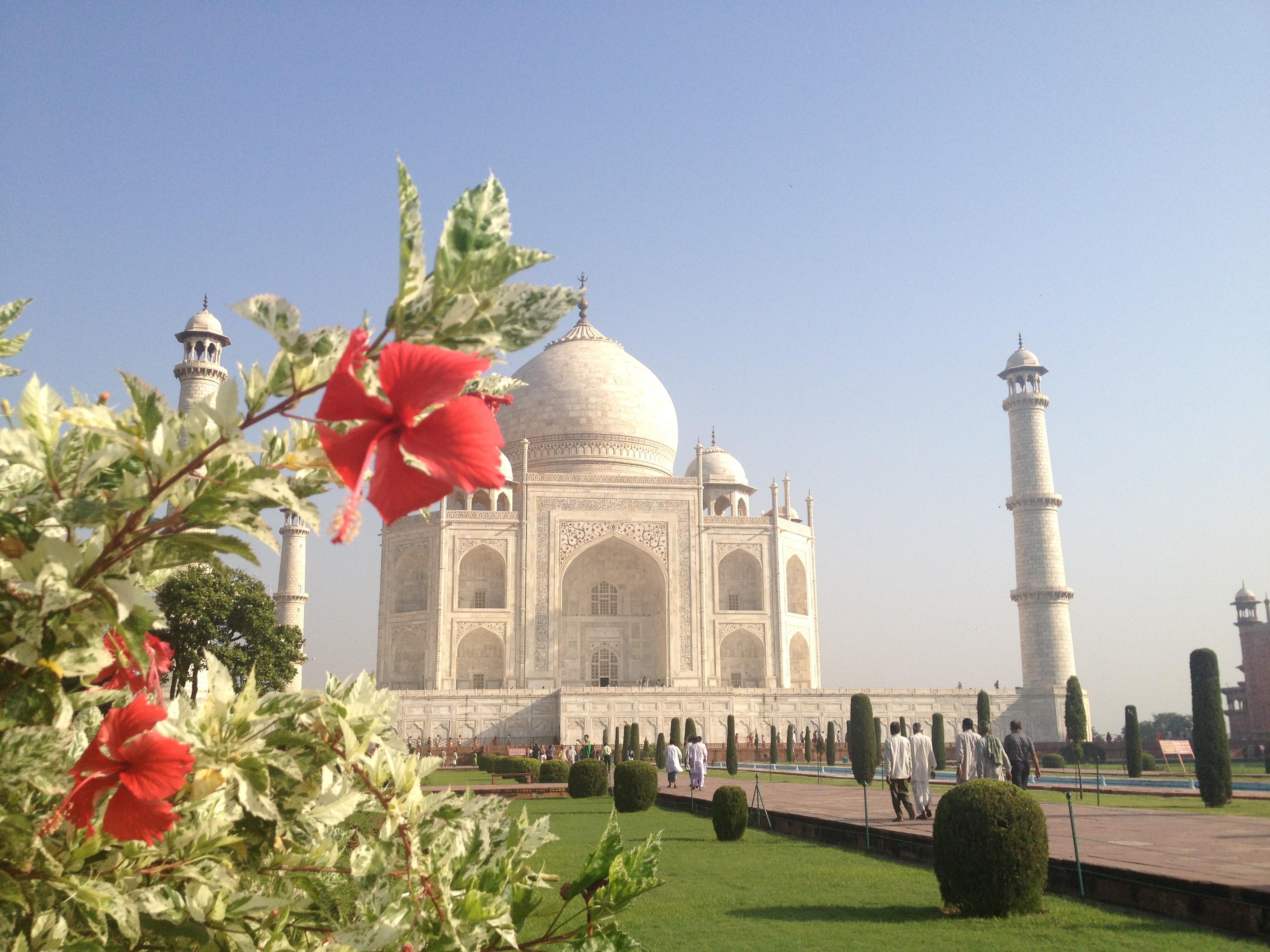 Taj flower