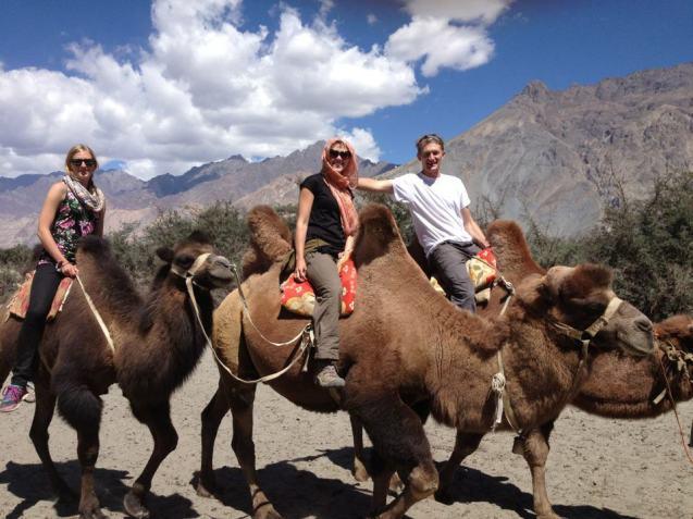 2hump camels