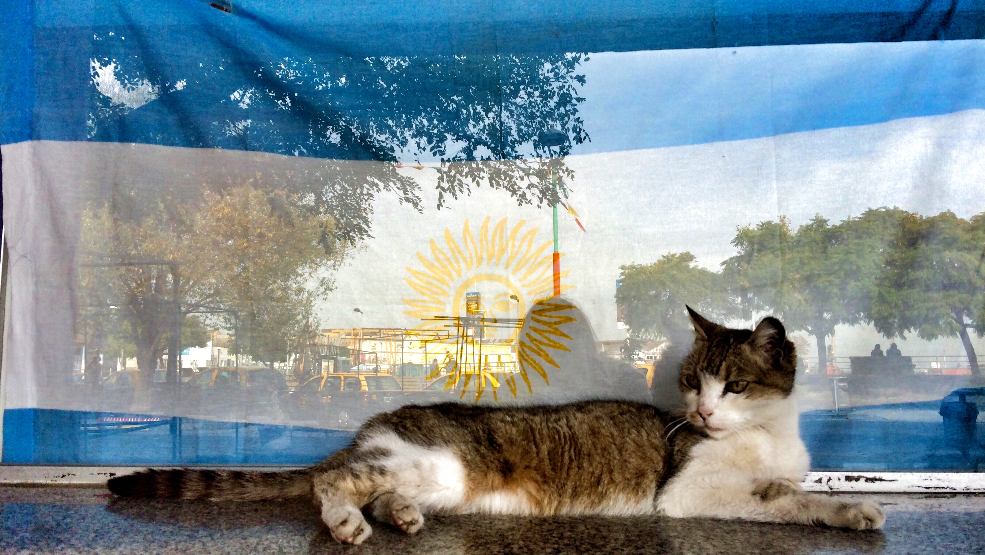 BA Boca kitty