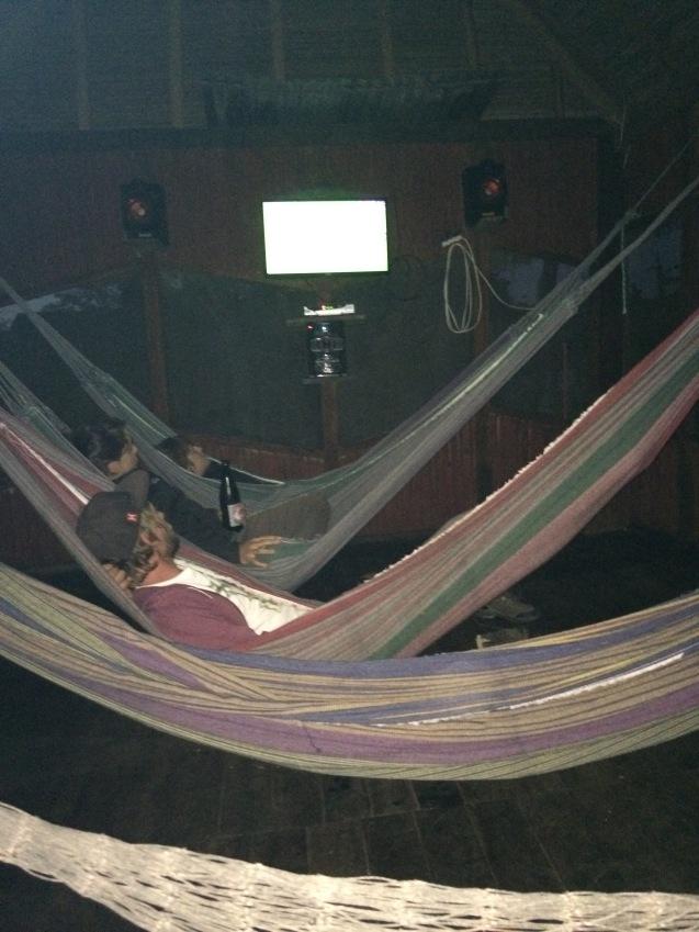 Pampas hanging