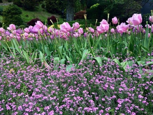 Welly gardens