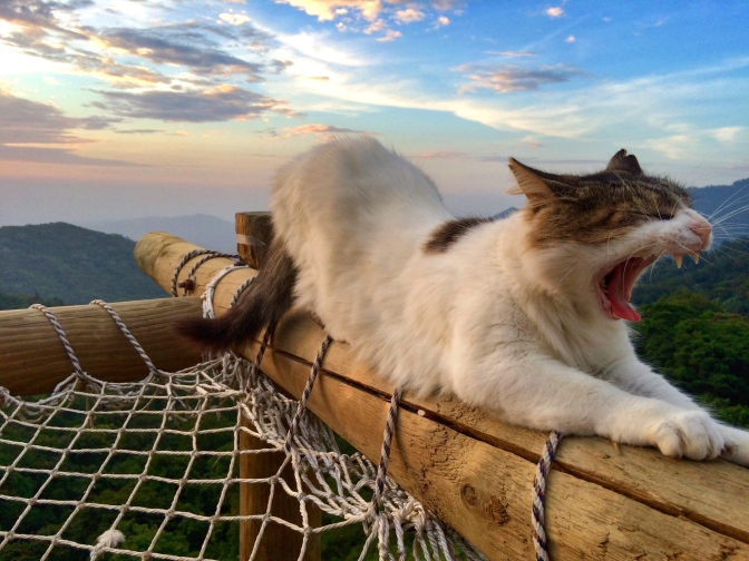 Minca hammock kitty