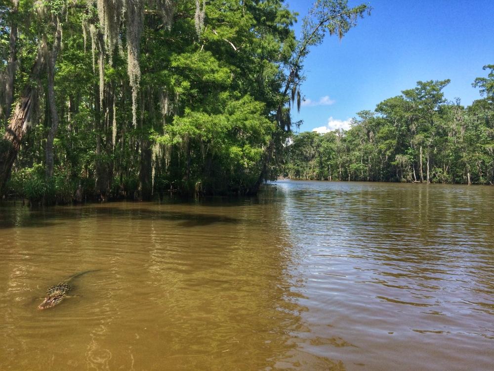 Nola bayou